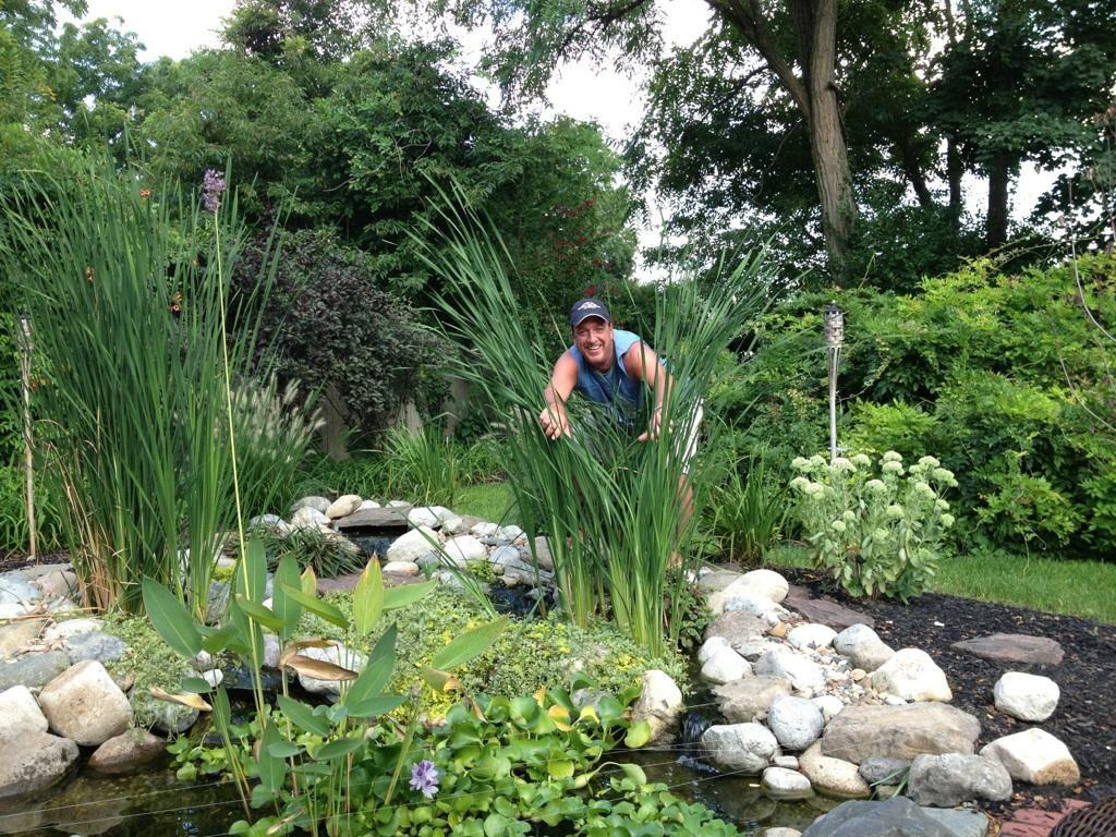 Pond maintenance contractor services south jersey camden for Koi pond upkeep