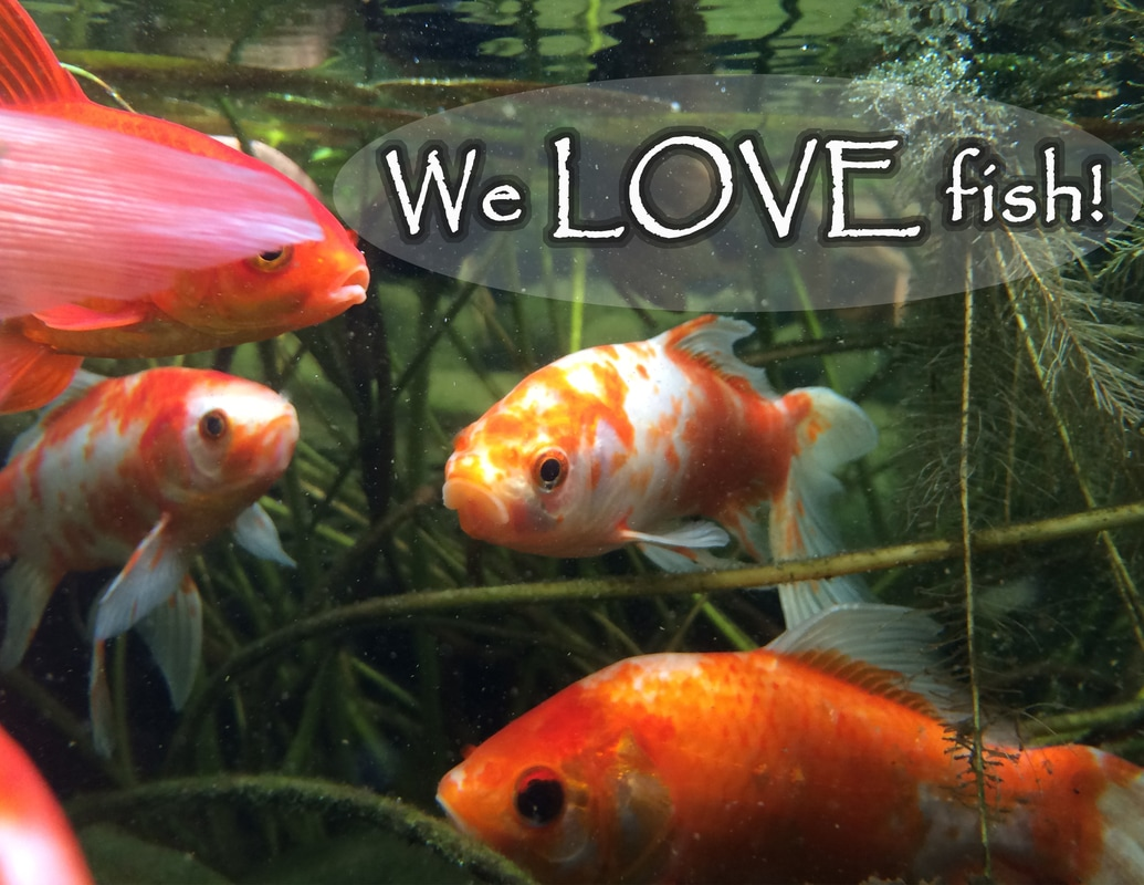 Protecting your koi from predators landvista aquascapes for Koi fish environment